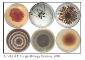 Petri dish cultures of fungi that live in plants