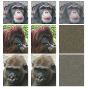 Graphic representation of the completedness of several great ape genomes, which are becoming clearer thanks to PacBio long-read DNA and RNA sequencing